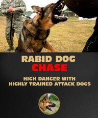 Rabid Dog Chase Riga | Stag Do In Riga